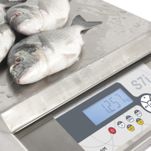 Fish market scale